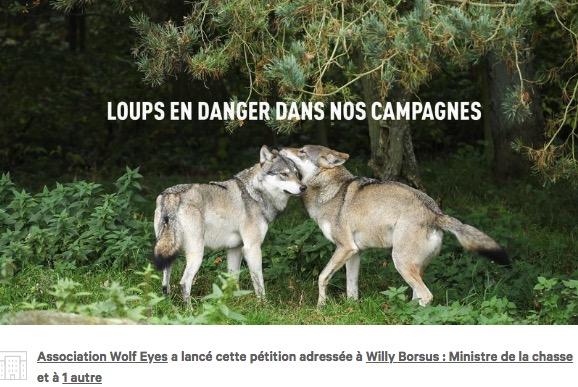 LES LOUPS EN DANGER DANS NOS CAMPAGNES!   SIGNEZ LA PETITION