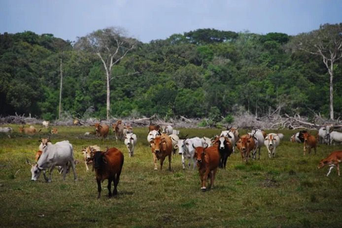 Le Parti néerlandais pour les animaux obtient le rejet du traité UE-Mercosur par le parlement !